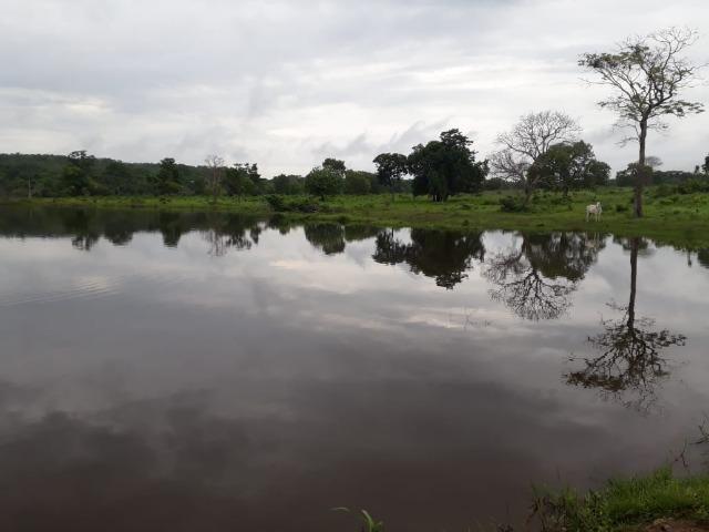 Fazenda com 160 aqls em Formoso do Araguaia - TO c/ confinamento e ótima infra!! - Foto 14