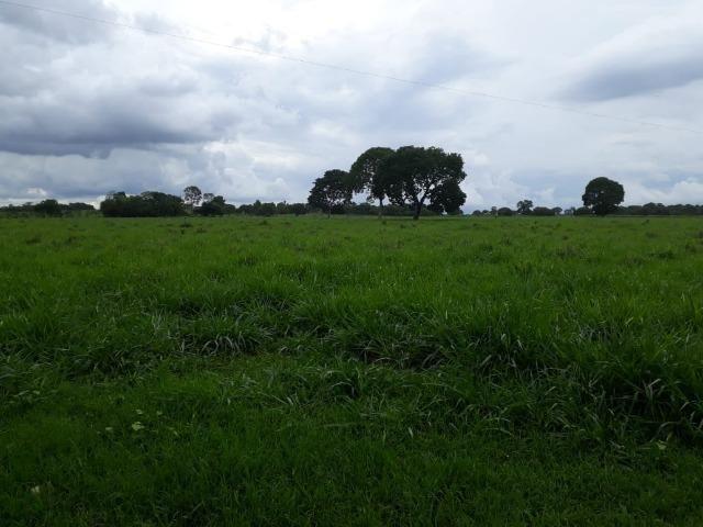 Fazenda com 160 aqls em Formoso do Araguaia - TO c/ confinamento e ótima infra!! - Foto 8