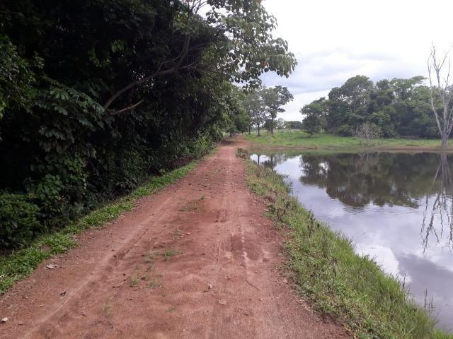 Fazenda com 160 aqls em Formoso do Araguaia - TO c/ confinamento e ótima infra!! - Foto 5