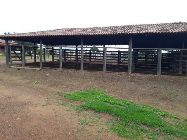 Fazenda com 160 aqls em Formoso do Araguaia - TO c/ confinamento e ótima infra!! - Foto 19