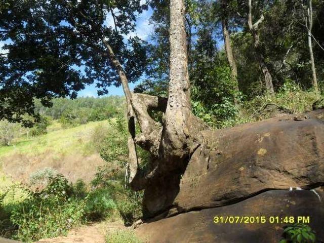 1683/Terreno de 3,19 ha com linda cachoeira e ótima localização - Foto 11
