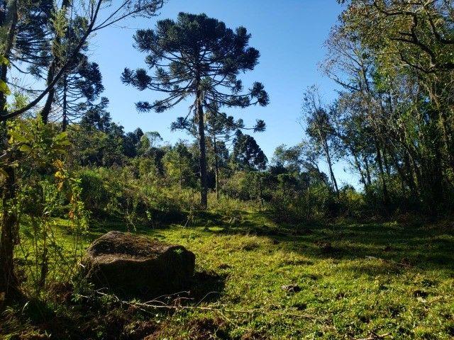 Sítio à venda em Bocaina do Sul - Foto 10