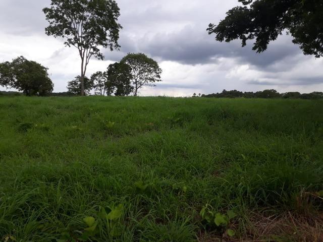 Fazenda com 160 aqls em Formoso do Araguaia - TO c/ confinamento e ótima infra!! - Foto 7