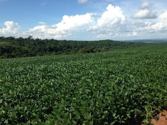 Fazenda 50 ALQ Plantio PR