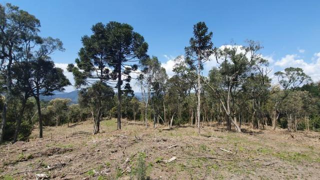 Sitio em Urubici /chácara em Urubici /sitio próximo a Rio Rufino - Foto 2