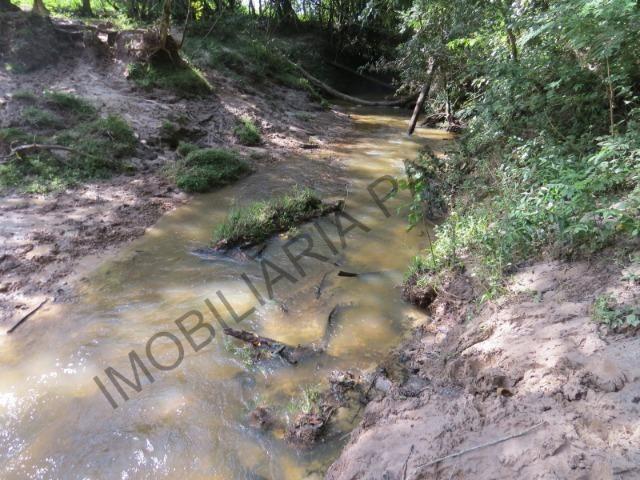 REF 1265 Sítio 15 alqueires, rico em água, Grande Oportunidade, Imobiliária Paletó - Foto 8