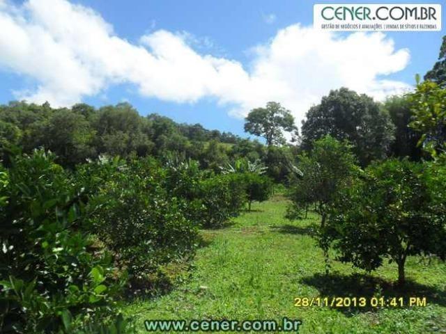 1426/Bela fazenda de 35 ha pertinho de Ouro Branco e com ótima estrutura e belo lago - Foto 9
