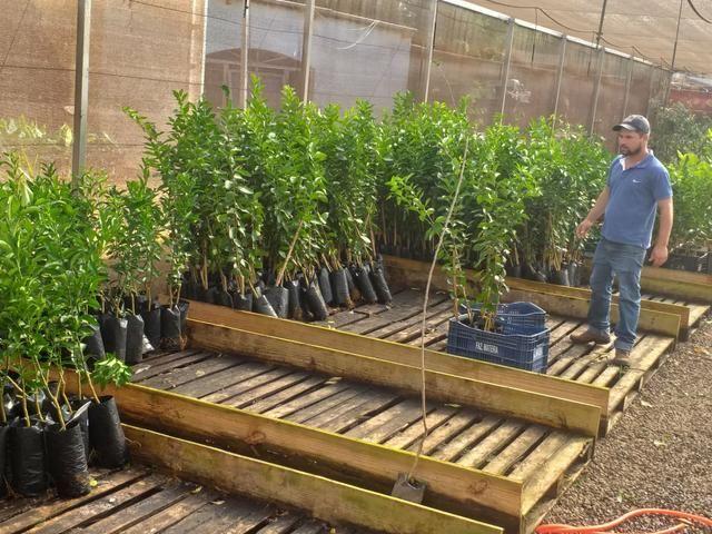 Mudas frutíferas,hortaliças e flores etc - Foto 3