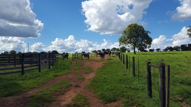 JP 013 -Ótima fazenda colado no Gama,excelente localização - Foto 13
