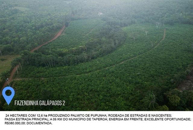 Fazenda Galápagos 2 - 24 Hectares - Foto 4