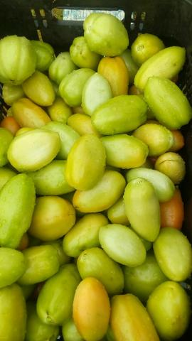 Tomate Saladete - Foto 2