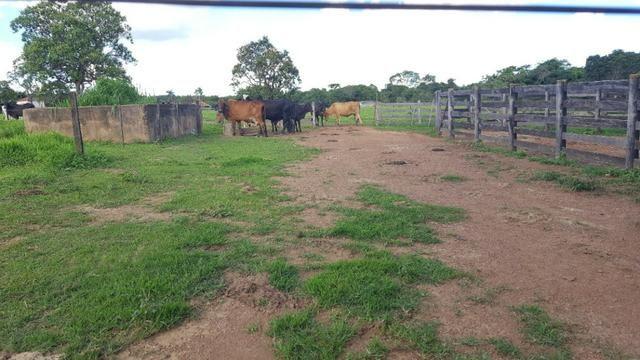 JP 013 -Ótima fazenda colado no Gama,excelente localização - Foto 19