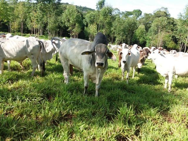 Área rural localizado na cidade de Lindoeste-PR - Foto 8