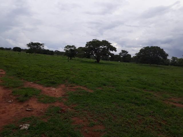 Fazenda com 160 aqls em Formoso do Araguaia - TO c/ confinamento e ótima infra!! - Foto 3
