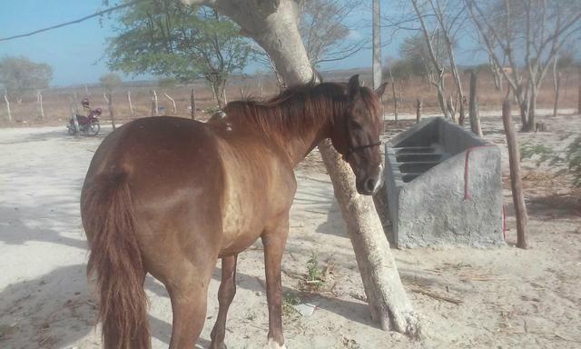 Cavalo de esteira pra trocar