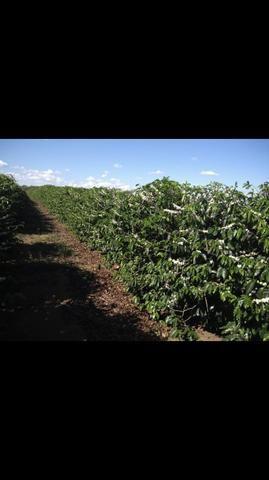 Terreno de café - Foto 3