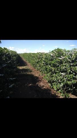 Terreno de café