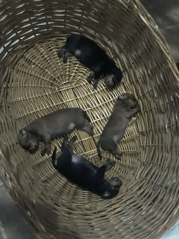 Cachorros no precinho - Foto 4