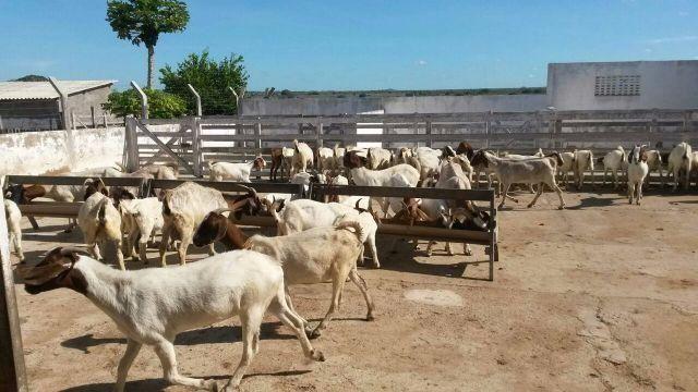 Fazenda na 304 entre macaiba e santa maria com 80 hc