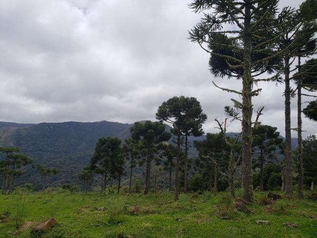 Sitio em Urubici /chácara em Urubici /área rural - Foto 5
