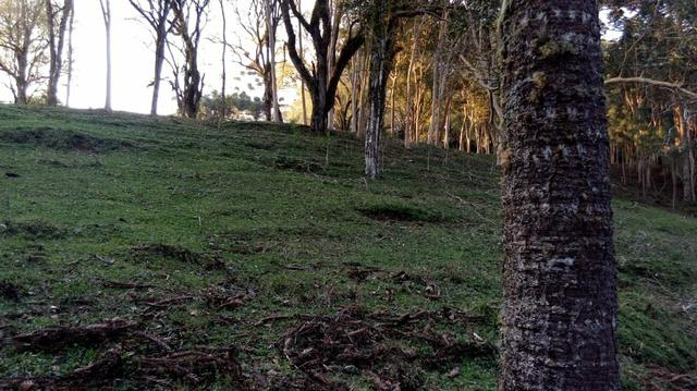 Chácara no formigueiro - Foto 2