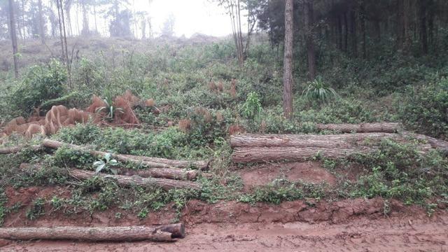 Terreno para fazer arado (mecanizar) - Foto 3