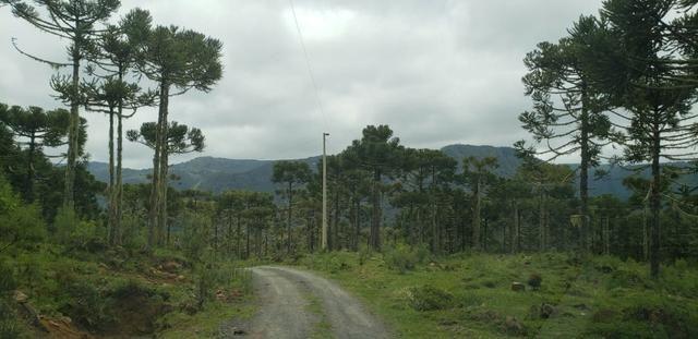 Sitio chácara em Urubici com vista para as montanhas - Foto 3