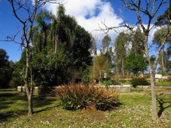 Terreno para alugar em Granja das acacias, Quatro barras cod:13074001 - Foto 7