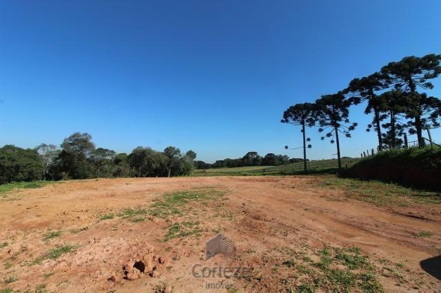 Terreno sem benfeitorias no Barro Preto - Foto 5