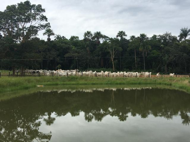 Excelente Fazenda para criação de gado - Foto 2