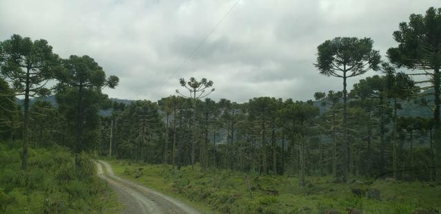 Sitio em Urubici /chácara em Urubici /área rural - Foto 3