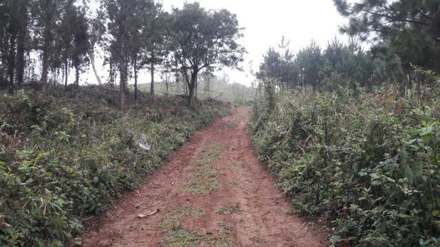 Terreno para fazer arado (mecanizar) - Foto 2