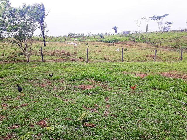 Vende-se terra ramal do mutum - Foto 6