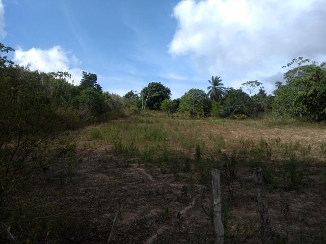Vendo fazenda com 125 tarefas em Pojuca - Ba - Foto 13