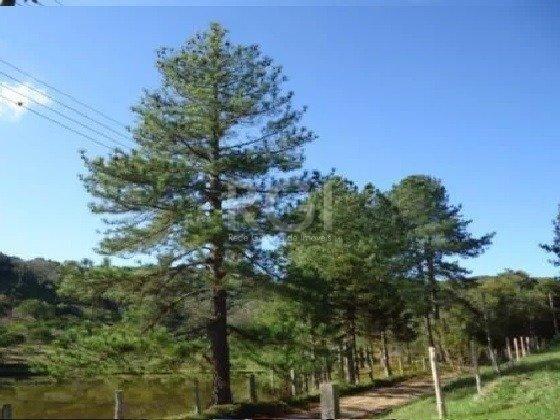 Sítio à venda em Lomba do pinheiro, Porto alegre cod:MI270383 - Foto 5