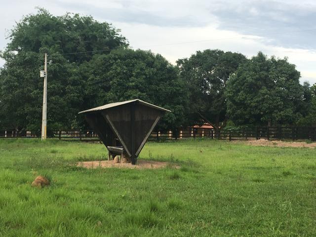 Excelente Fazenda para criação de gado - Foto 3