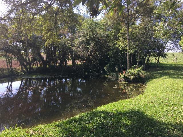 Chacara - São José dos Pinhais - Foto 4