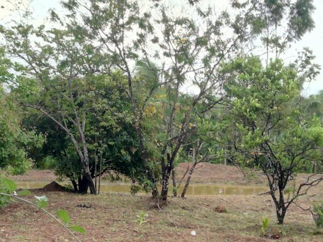 Venda de um sítio em Bacabeira.zap 98( * - Foto 5