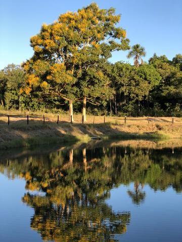 Excelente Fazenda para criação de gado - Foto 8
