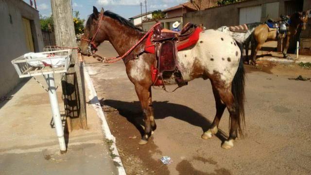 Vendo um cavalo. - Foto 2