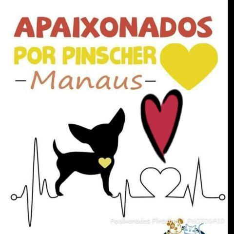 Grupo Apaixonados por Pinscher Manaus