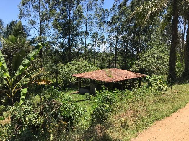 Fazenda na estrada Ilhéus/ Sambaituba - Foto 4