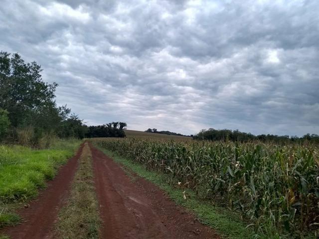 Fazenda de lavoura em Ponta Porã MS - Foto 4