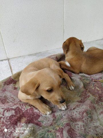 Doação de Cachorros - Foto 6