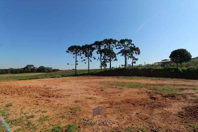 Terreno sem benfeitorias no Barro Preto - Foto 7