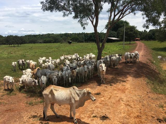 Excelente Fazenda para criação de gado
