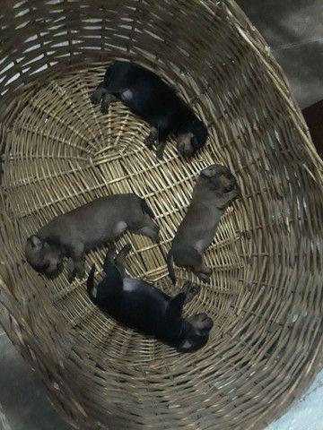 Cachorros no precinho - Foto 3