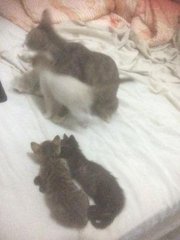 Gato ? adoção q quero fazer tenho 4 filhotes recém paro d mama come ração
