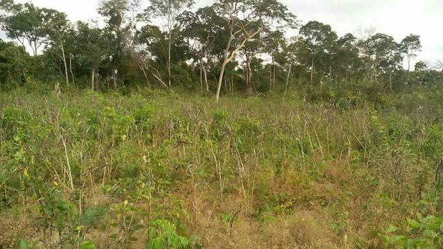 50 hectares valor 45000 região na região de bom Jardim - Foto 3