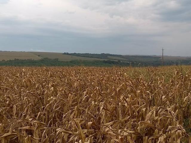 Fazenda de lavoura em Ponta Porã MS - Foto 5